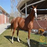 خرید اسب و فروش اسب_بلابالونا