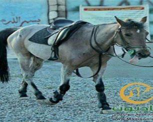 خرید اسب و فروش اسب_دلدل