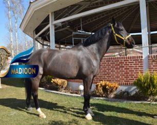 خرید اسب و فروش اسب_لانکوم ام