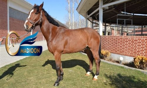 خرید اسب و فروش اسب_لی هازل وود