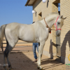 خرید اسب و فروش اسب_نخجیر