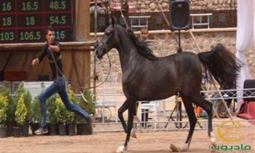 خرید اسب و فروش اسب_وارا