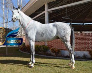 خرید اسب و فروش اسب_کورنت فری