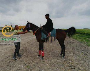 خرید اسب و فروش اسب_سریک