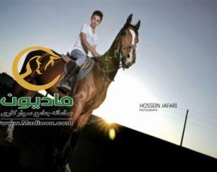 خرید اسب و فروش اسب_ایوان