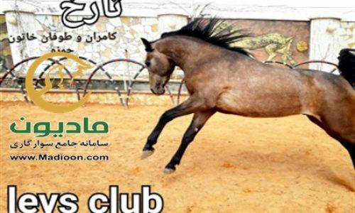 خرید اسب و فروش اسب_سزار حمزه