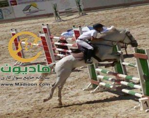 خرید اسب و فروش اسب_سیلورسان
