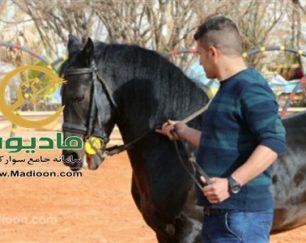 خرید اسب و فروش اسب_هارای روژین