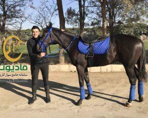 خرید اسب و فروش اسب_بوگاتی