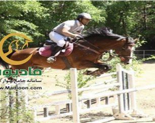 خرید اسب و فروش اسب_lancelot