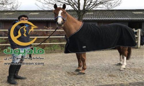خرید اسب و فروش اسب_miranda