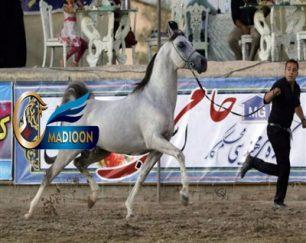 خرید اسب و فروش اسب_گردان بنوار