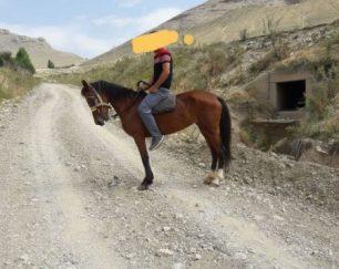 خرید اسب و فروش اسب_قرمزی