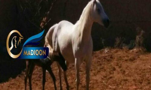 خرید اسب و فروش اسب_ارابل