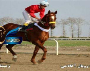 خرید اسب و فروش اسب_رویال آکادمی