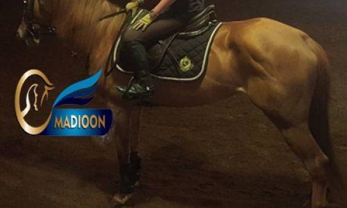خرید اسب و فروش اسب_عقیق