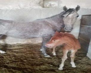 خرید اسب و فروش اسب_دریا