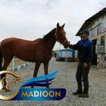 خرید اسب و فروش اسب_ فینیکس