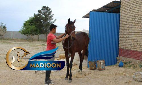خرید اسب و فروش اسب_ حامی
