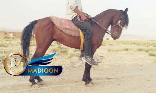 خرید اسب و فروش اسب_ نجیب