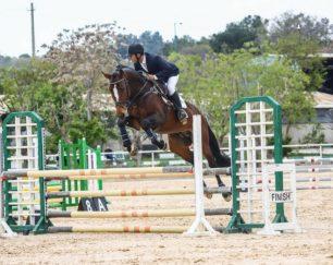 خرید اسب و فروش اسب_ دراگو