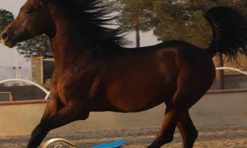 خرید اسب و فروش اسب_ وکمان