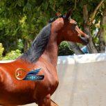 خرید اسب و فروش اسب _ اسب عرب مصری