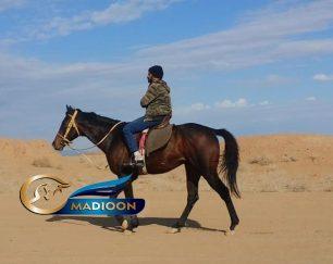 خرید اسب و فروش اسب_ یونیک استار