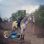 خرید اسب و فروش اسب_ نریان ورزشی