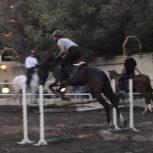 خرید اسب و فروش اسب_ کاملوت