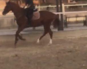 خرید اسب و فروش اسب_ راکائل