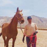 خرید اسب و فروش اسب_ ساغر