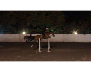 خرید اسب و فروش اسب _Axor