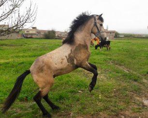 خرید اسب و فروش اسب_کوردستان آتی