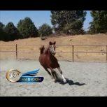 خرید اسب و فروش اسب_ مادیان خالص کرد