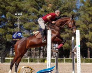 خرید اسب و فروش اسب_فدورا
