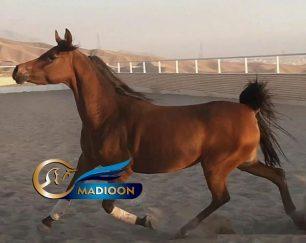 خرید اسب و فروش اسب_آیدا