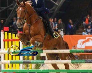 خرید اسب و فروش اسب_ اسب وارداتی