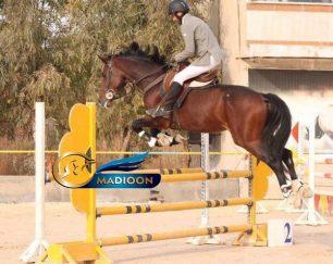 خرید اسب و فروش اسب_ کره لرد