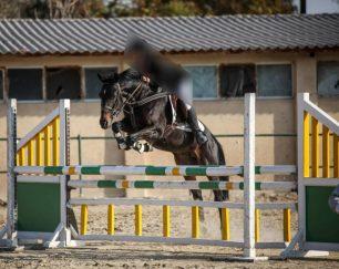 خرید اسب و فروش اسب_ تایسون