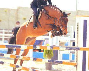 خرید اسب و فروش اسب_اسب پرشی Pure Z