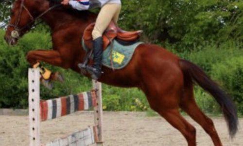 خرید اسب و فروش اسب_ Ario