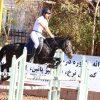 خرید اسب و فروش اسب_مادیون دوخون
