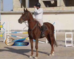 خرید اسب و فروش اسب_ نریان دوسر خارجی