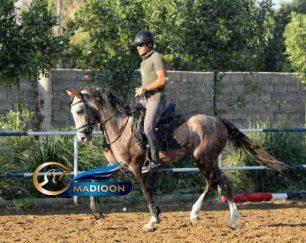 خرید اسب و فروش اسب_ اسب ترکمن یموت
