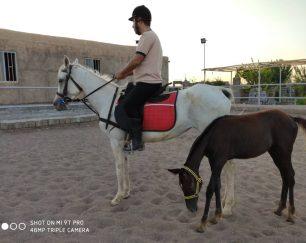 خرید اسب و فروش اسب_ وندا
