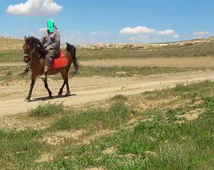 خرید اسب و فروش اسب_ جیران