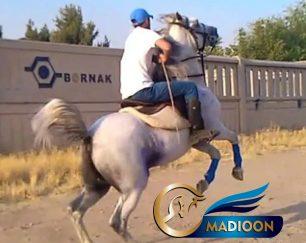 خرید اسب و فروش اسب_ سیلمی کرد