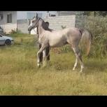 مادیون خرید اسب و فروش اسب_ سامع