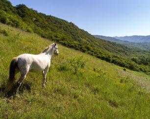 خرید اسب و فروش اسب_لیلا